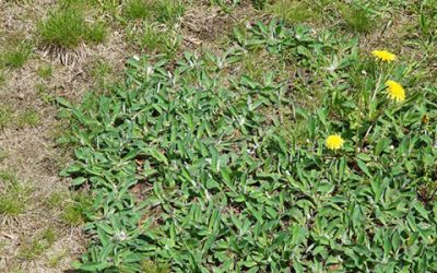 Top 5 Reasons Your Lawn Looks Ugly!